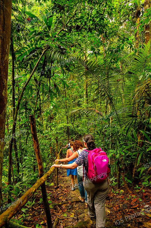Hiking the wet slippery trail to the canopy walkway in the Amazon Jungle