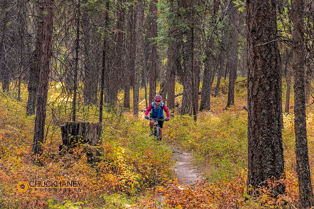 Mountain biking the singletrack at the Pig Farm Trails near Whitefish, Montana, USA MR
