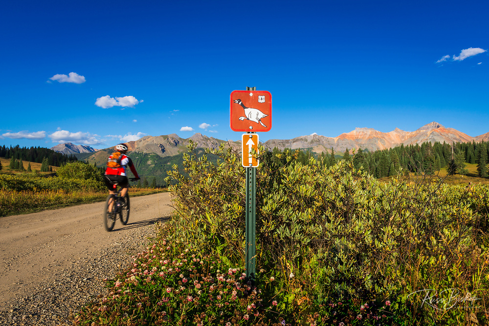 Mountain biker on the Galloping Goose Trail, Uncompahgre National Forest, Colorado USA (MR)