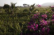 Sula Wines, Nashik, Indien<br /> COPYRIGHT 2009 CHRISTINA SJÖGREN<br /> ALL RIGHTS RESERVED