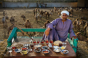 Camel broker Saleh Abdul Fadlallah with his day's worth of food at the Birqash Camel Market outside Cairo, Egypt. (From the book What I Eat: Around the World in 80 Diets.) The caloric value of his day's worth of food on a typical day in the month of April was 3200 kcals.  He is 40 years of age; 5 feet, 8 inches tall; and 165 pounds. Contrary to popular belief, camels' humps don't store water; they are a reservoir of fatty tissue that minimizes the need for heat-trapping insulation in the rest of their bodies; the dromedary, or Arabian camel, has a single hump, while Asian camels have two. Camels are well suited for desert climes: their long legs and huge, two-toed feet with leathery pads enable them to walk easily in sand, and their eyelids, nostrils, and thick coat protect them from heat and blowing sand. These characteristics, along with their ability to eat thorny vegetation and derive sufficient moisture from tough green herbage, allow camels to survive in very inhospitable terrain. MODEL RELEASED.