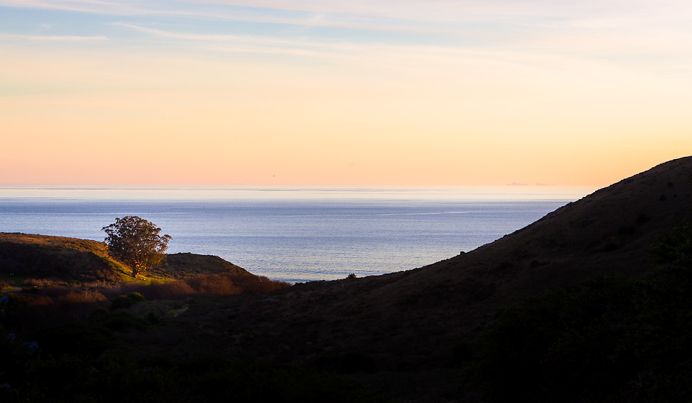 Tree catches last light of the day above Coast Camp, Point Reyes National Seashore. The Farallon Islands appear through the fog offshore.