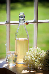 Bottle of elderflower cordial made with freshly picked elderflowers. Sambucus nigra