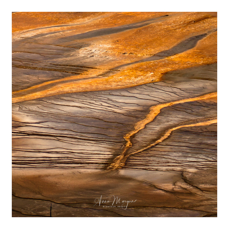 colourful close up of the run off from grand prismatic spring in yellowstone national park