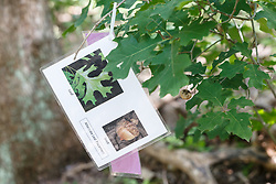 Tree identification, Dogwood Canyon Audubon Center, Cedar Hill, Texas, USA.