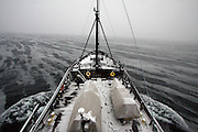 Grease ice slicks the water's surface as Sea Shepherd ship, the M/Y Steve Irwin sails through Antarctica's Southern Ocean in search of the Japanese whaling fleet.