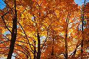 Autumn foliage <br />Chutes Provincial Park<br />Ontario<br />Canada