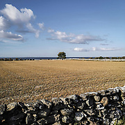 Landskap på södra Gotland.<br /> PHOTO © Bernt Lindgren