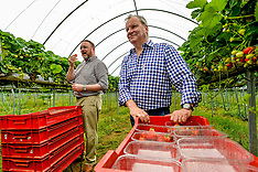 Politicians see fruit picking workers shortage for themselves, Perthshire, 20 July 2018