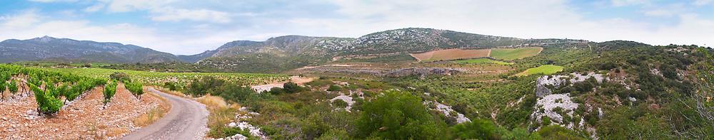 Domaine d'Aupilhac. Montpeyroux. Languedoc. Garrigue undergrowth vegetation with bushes and herbs. France. Europe. Vineyard. Mountains in the background.