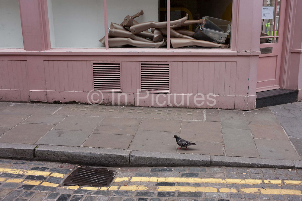 Legs and lower limbs from retail mannequins are piled up in a closed shop window, central London. A pigeons struts along the pavement, beneath the pink-coloured frontage of this business awaiting re-opening after a refurbishment. Lying in the window is the pile of legs, like a pile of disjointed bodies.
