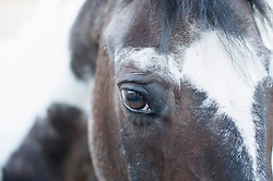 Extreme close-up of a horse, Bavaria, Germany