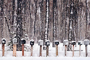Row of Mailboxes after a winter storm, set against a stand of cottonwoods in Jackson Hole, WY