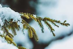 THEMENBILD - Schnee und Eis auf einem dünnen Ast einer Fichte, aufgenommen am 06. Februar 2019 in Kaprun, Oesterreich // Snow and ice on a thin branch of a spruce in Kaprun, Austria on 2019/02/06. EXPA Pictures © 2019, PhotoCredit: EXPA/Stefanie Oberhauser