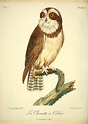 Chouette à collier - The band-bellied owl (Pulsatrix melanota) is a species of owl in the family Strigidae. Bird of Prey from the Book Histoire naturelle des oiseaux d'Afrique [Natural History of birds of Africa] by Le Vaillant, François, 1753-1824; Publish in Paris by Chez J.J. Fuchs, libraire .1799