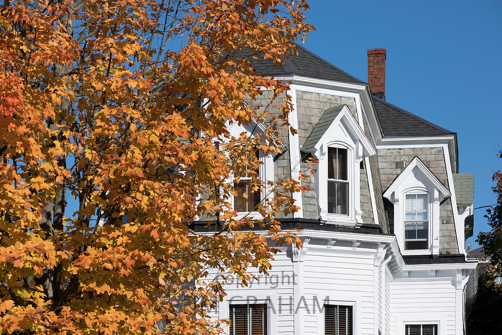 Traditional painted wood clapboard home and Maple tree in Fall color in Newport, Rhode Island, USA