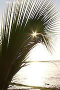 Sun bursting through a palm leaf