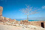 Israel, Massada, lone tree on the top of Metsada