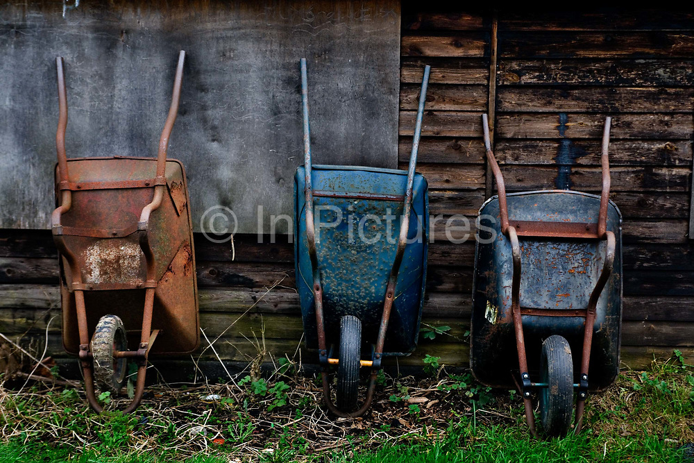 Three wheelbarrows proped against a shed in North London allotment, 11th January 2007, London United Kingdom. Allotments have now been around for centuries, a simple plot of land rented and cherished by an individual typically used for growing vegetables or flowers. However for some allotmenteers, their 10 poles sized plot can mean a whole lot more than just the need to grow a few spuds. Some see their plot as their sanctuary, a place of therapy and peace of mind, where one can enjoy the simplicity of nature and wildlife.