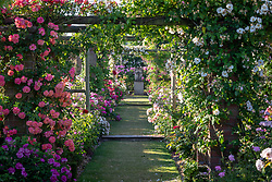 Vista in The Long Garden at David Austin Roses with Rosa 'Anne Dakin' on the left.