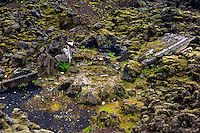 Vestmannaeyjar Islands off the south coast of Iceland. Eldfell on Heimaey was formed in a volcanic eruption in 1973. Ruins of a house.