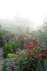 Misty morning in the Exotic Garden at Great Dixter with house in the background. Planting includes dahlias, cannas, Verbena bonariensis, Dahlia 'Wittemans Superba', Eucalyptus gunnii and Paulownia tomentosa AGM