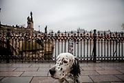 """English Setter """"Rudy"""" am 22.11. 2018 auf einem Spaziergang vor der Prager Karlsbrücke. Rudy wurde Anfang Januar 2017 geboren."""