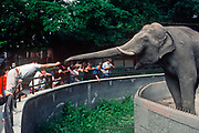 A visitor to Budapest zoo reaches out with food scraps to a captive elephant, whose enclosure has sharp spikes around its moat, on 13th June 1990, in Budapest, Hungary.