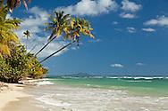 Palm trees and sea grape along the beach at Palmas del Mar.