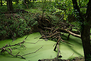 UNIONTOWN, AL – MAY 21, 2015: Sewage from a spray field overflows into Freetown Creek, contaminating the local water supply. Despite the prevalence of chalky clay soil throughout much of the Black Belt, spray fields have been utilized as a primary sewage treatment method.