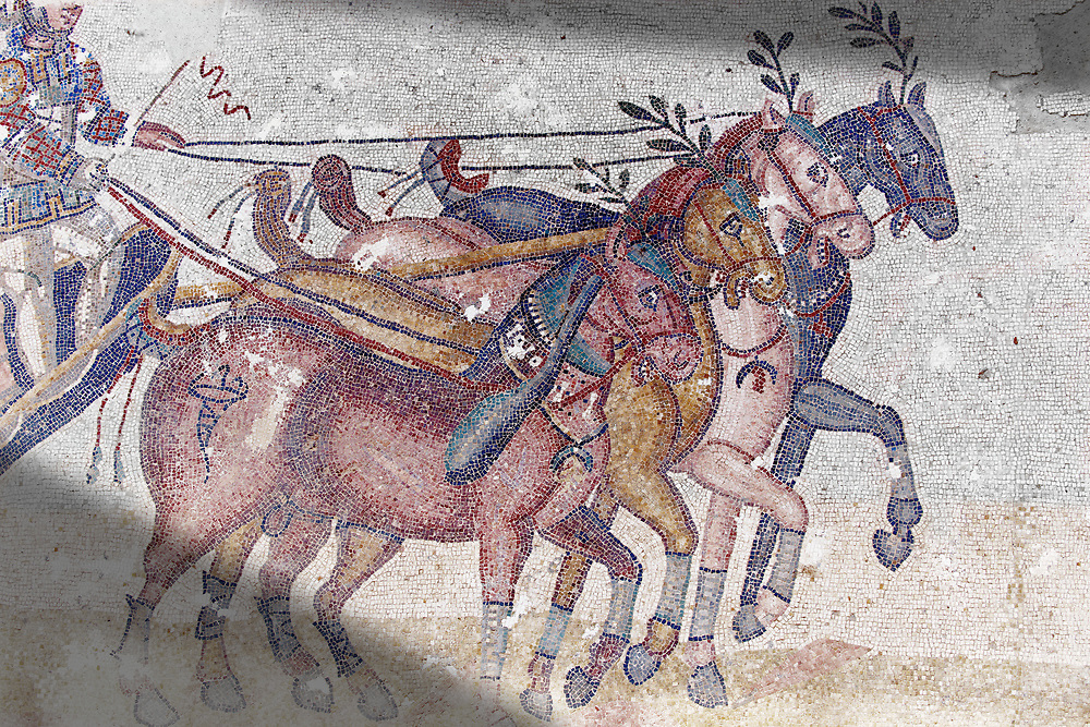 Close up of a chariot racing at the Circus Maximus Chariot racing at the Circus Maximus from the Palaestra room no 15.. Roman mosaics at the Villa Romana del Casale which containis the richest, largest and most complex collection of Roman mosaics in the world. Constructed in the first quarter of the 4th century AD. Sicily, Italy. A UNESCO World Heritage Site. .<br /> <br /> If you prefer to buy from our ALAMY PHOTO LIBRARY  Collection visit : https://www.alamy.com/portfolio/paul-williams-funkystock/villaromanadelcasale.html<br /> Visit our ROMAN MOSAICS  PHOTO COLLECTIONS for more photos to buy as buy as wall art prints https://funkystock.photoshelter.com/gallery/Roman-Mosaics-Roman-Mosaic-Pictures-Photos-and-Images-Fotos/G00008dLtP71H_yc/C0000q_tZnliJD08