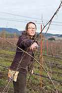 Morgan Hall, assistant wine grower and wine maker.<br /> Johan Vineyards, Willamette Valley, Oregon, USA