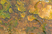 Colorful algae and bacteria grow in hot geothermal runoff from a hot pool in Yellowstone National Park.