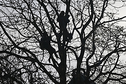 © Licensed to London News Pictures. 28/01/2021. London, UK. HS2 Rebellion protesters remain in the trees above Euston Square Gardens in central London. Protestors are resisting a police operation to remove them for a second day. It is reported the protesters have built a 100ft tunnel under the gardens. Photo credit: Peter Macdiarmid/LNP