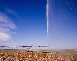 Irrigacao / Irrigation