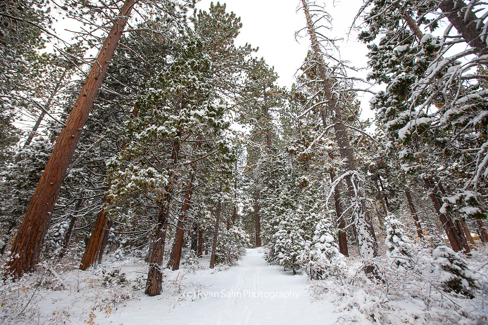 First Snowfall Lake Tahoe 20/21 season