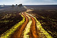 Dirt road across autumn fields