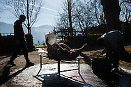 A dead lies dead and eviscerated in traditional way pig slaughtering. Legasa (Basque Country). January 7, 2017. The slaughter traditionally takes place in the autumn and early winter and the work often is done in the open. (Gari Garaialde / Bostok Photo)