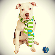 Adorable pit bull puppy needs a home.