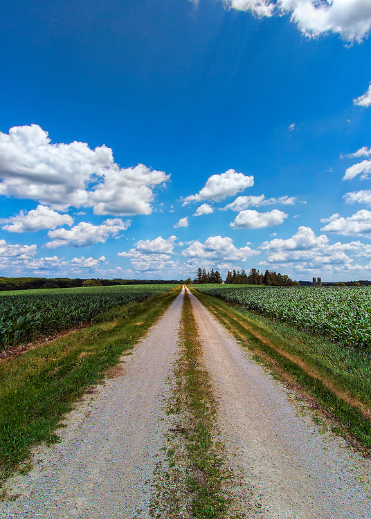 A long gravel rural road stretches through an Iowa corn field on a vibrant summer day. Reaching trees and silos deep in the distance give clues as to what may await at the end of the journey.