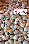 Fresh Sea Food & Fish - Chioggia - Venice Italy