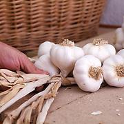 Garlic, Espirat, Auvergne, France