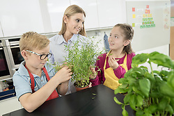Teacher showing students rosemary plant in home economics class, Bavaria, Germany