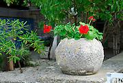 A Kamenica (traditional olive oil storage stonebasin) growing flowers. Island of Vrnik, Croatia