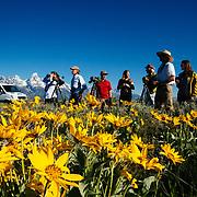 A Teton Teton Science Schools wildlife tour stops to explore the balsamroot flowers along the Antelope Flats Road in Grand Teton National Park, Wyoming.(Matthew Bart, Maura Bushior, Katie-Cloe Stock, Lead Guide Dawson)