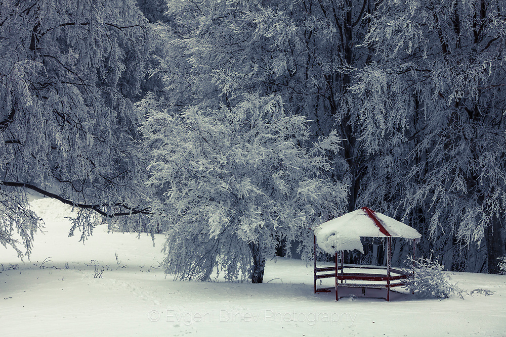 A bower under snow trees