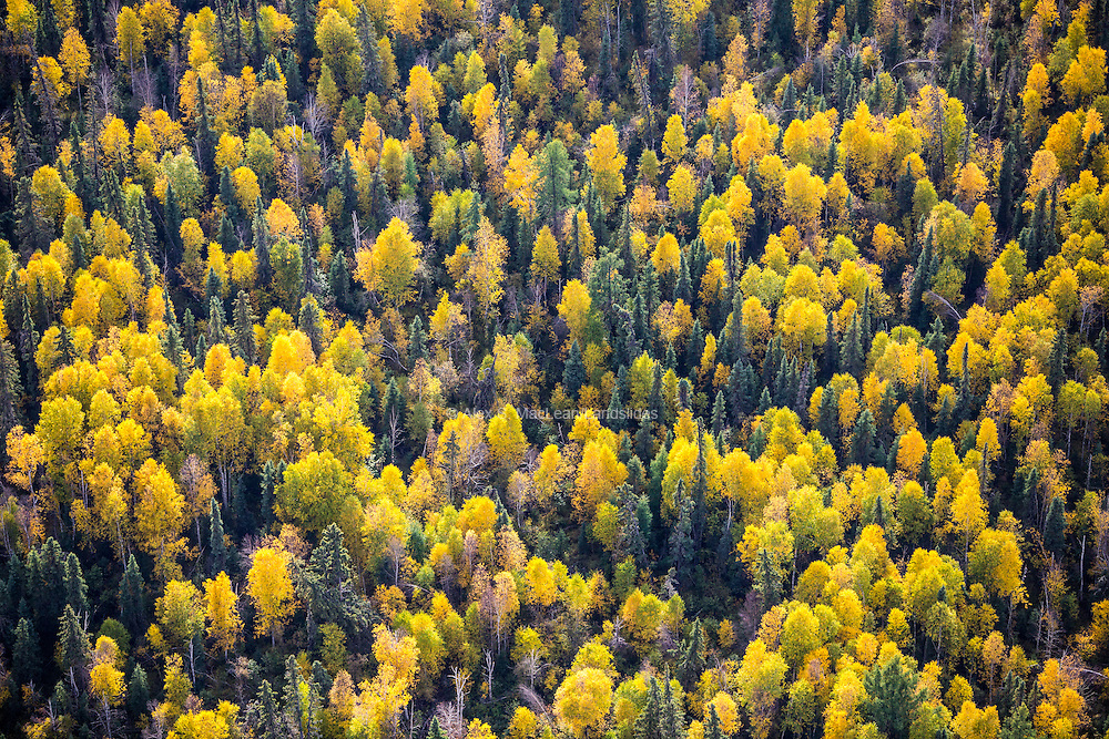 """The boreal forest is made up of both coniferous and deciduous trees. The boreal forest biome, also commonly referred to as """"taiga"""", wraps around the northern hemisphere and accounts for one third of the world's forested land."""