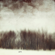 Abstract winter landscape with birds - textured & manipulated photograph<br /> Society6 Prints: http://bit.ly/2erHuvv