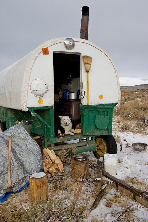 Sheep wagon with a working sheep dog guarding the doorway with early winter weather in the Sawtooth Valley in Central Idaho
