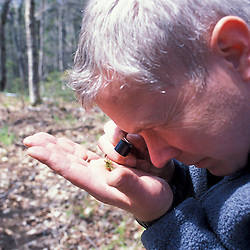 Kibby Township, ME. Manomet scientist identifies a moss species indicative of a late successional hardwood forest. Plum Creek land.